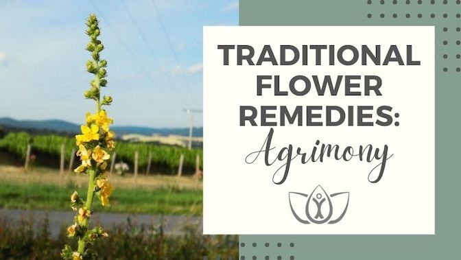 Traditional Flower Remedies: Agrimony