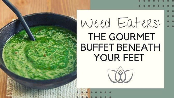 Weed Eaters: The Gourmet Buffet Beneath Your Feet- Purslane Chimichurri Recipe