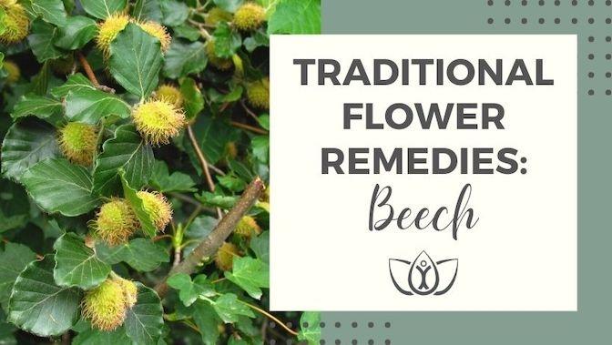 Traditional Flower Remedies: Beech
