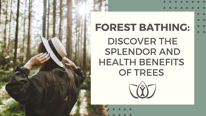 Forest Bathing: Discover the Splendor and Health Benefits of Trees